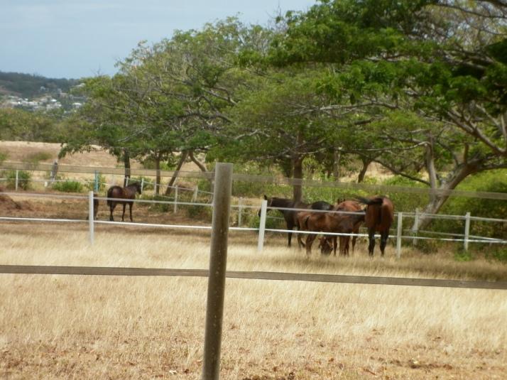 HorsesatFreshMilk